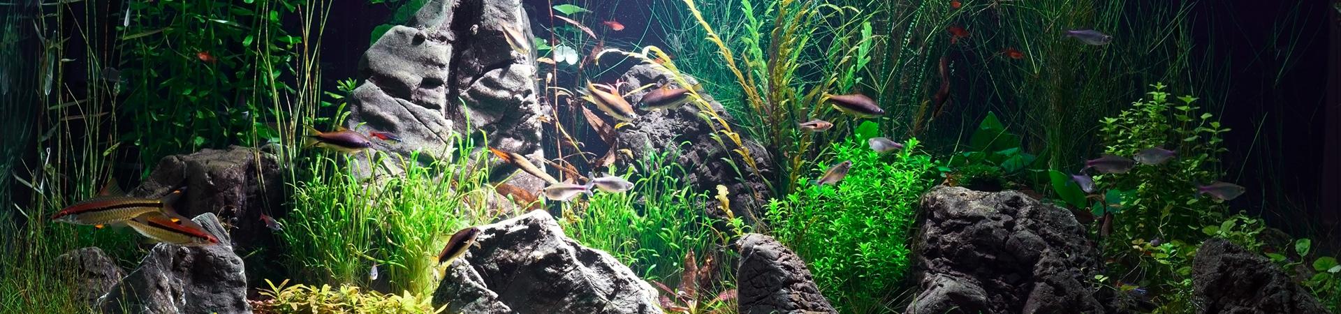 Locafish - Liens